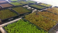 Netcurso-aprende-a-cultivar-con-hidroponia