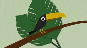 Free udemy coupon Create Toucan in Illustrator from Sketch