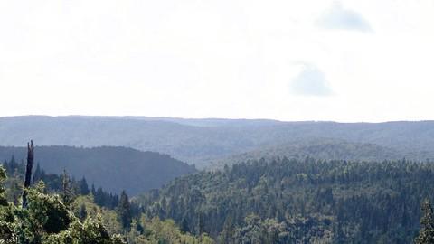 Netcurso-bosques-y-cambio-climatico