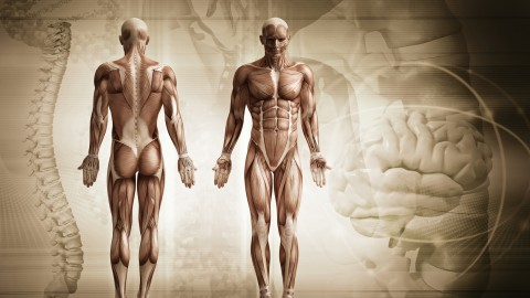 Netcurso - ameliorez-votre-posture