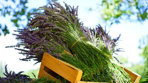 Introductory Aromatherapy Course For Natural Living