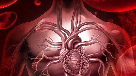 Aprende sobre el Cuerpo Humano