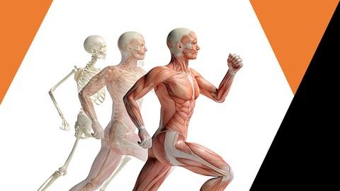Netcurso-//netcurso.net/pt/sistema-respiratorio-anatomia-humana