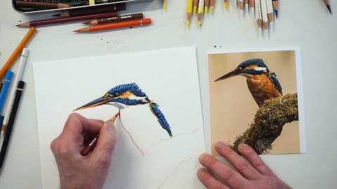 Use Coloured Pencils to draw a beautiful Kingfisher