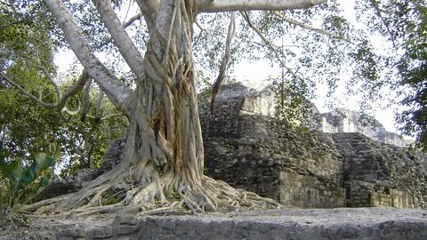 Maya Architecture, Design and Civilization