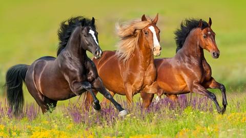 Horses 101 - Horse Colors, Breeds & Disciplines