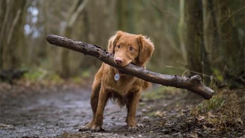 Netcurso-brave-puppy