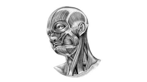 Netcurso-head-and-neck-neuroanatomy
