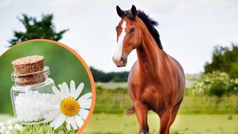 Netcurso-schuessler-salze-pferd