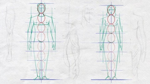 Easy Steps to Figure Drawing - Anatomy of Male & Female Body