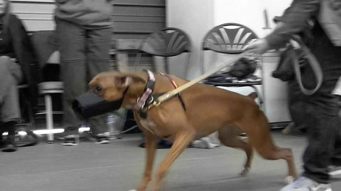 Growl Class - A Workshop Demo for Reactive Dogs