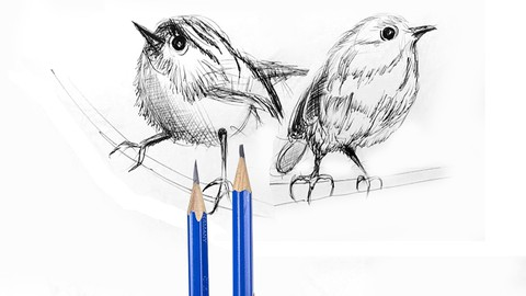 Netcurso-drawing-sketching-of-birds