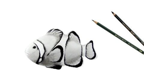 Netcurso-tiere-zeichnen-der-praxisorientierte-komplettkurs