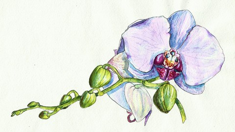 Watercolor realistic orchid painting: step by step workshop