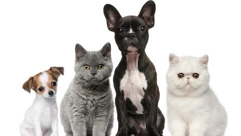 Netcurso-animal-reiki-certification
