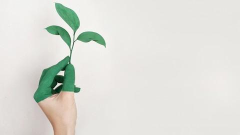 ISO 14001: Implementación de un Sistema de Gestión Ambiental