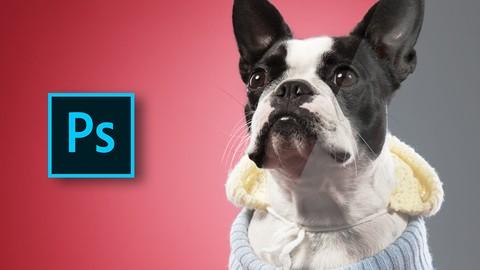 Netcurso-photoshop-retouching-the-dog