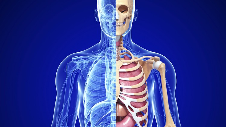 Anatomy & Physiology of Movement