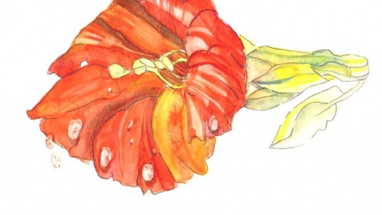 Watercolour Painting - How to paint Flowers