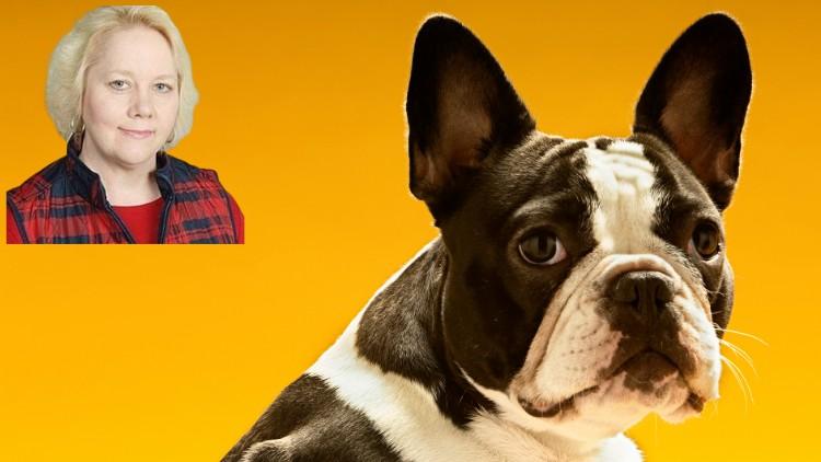 Law; Contract Law; Dog; Cat; Pet; Custody Agreement