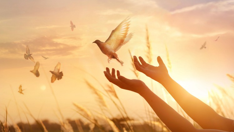 A Practical Guide to Forgiveness: How to Heal Past Hurt