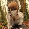 JackSquirrel